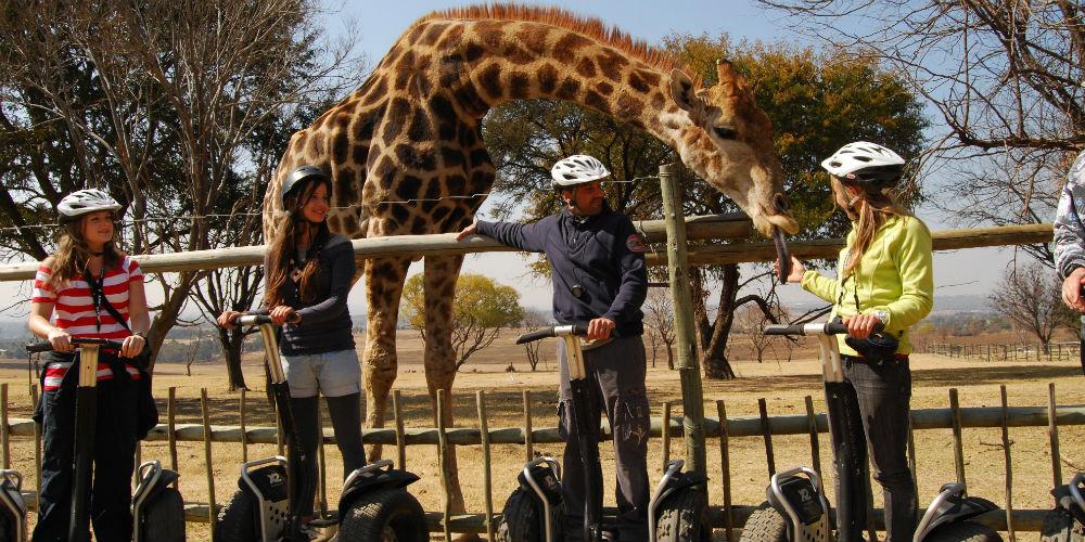 Segway-Gliding-Tour-in-Lion-Park-Johannesburg-1000.jpg