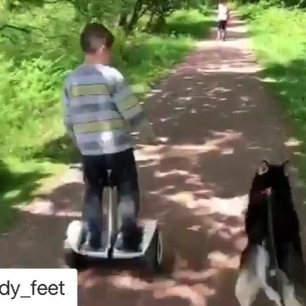 Time to take the dog 🐕 out for a run with a solo wheel @speedy_feet ・・・ Out in the INMOTION L8F 🛴, Segway MiniLite, Gotway Monster and the Segway Mini Pro