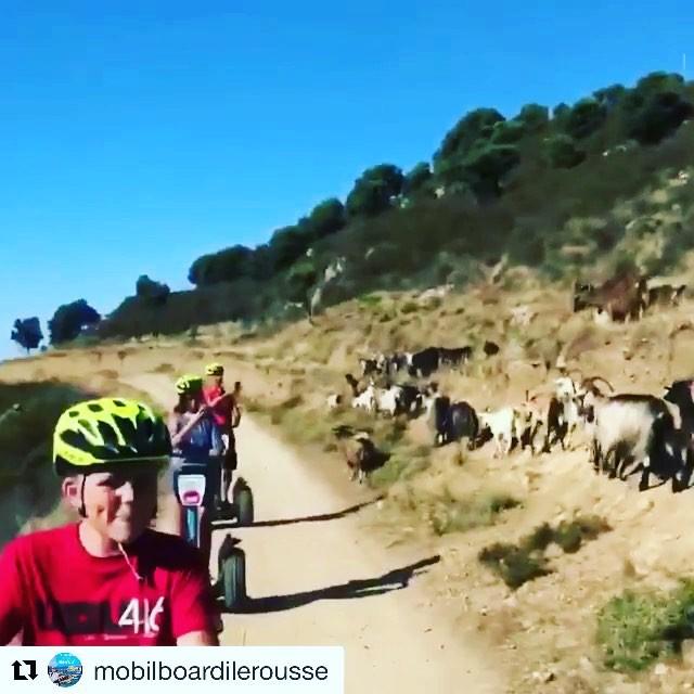 We ran into a Goat traffic jam on  our Segway tour. Not a sentence you get to say everyday! @mobilboardilerousse ・・・ Escapade dans le maquis... à la découverte de Sant Antonino ! 🌳🦋 #goat🐐